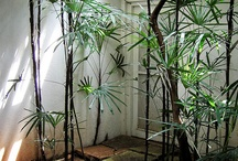 Tropical Modernism / Natural environment and spaces that blended the outside with the inside. In the footsteps of Bawa