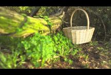 Basket Company / Discount prices