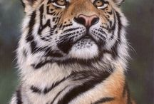 leoparr / kediler