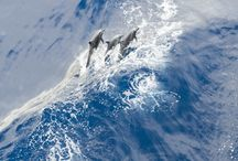 Dolphins / by oceans initiative