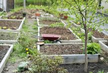 D.I.Y Gardening Projects