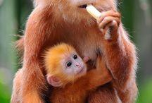 Monkey Business / Monkeys