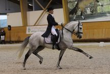 Dressage / Classical Dressage / The beauty and elegance of Dressage