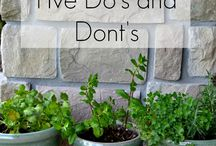 Herbs / All about herbs: herbs in pots, herbs for the garden, herbs to make you (and your chickens) feel good!