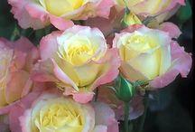 Flowers / by Barb Lojwaniuk