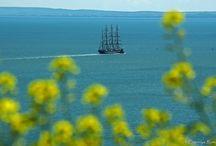 Sailboats. Sailing. Tall ships. Sea life. / Sea Around Us