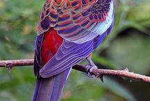 Parrots & birds of paradise