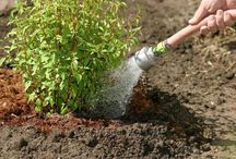 General Plant and Landscaping Care