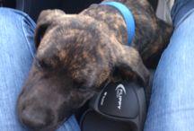 My dog / Raoh
