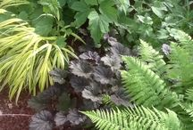 Shady Corners / Ideals plants, gardening tips for utilizing shady corners.