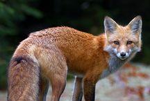 Animali selvatici / Natura
