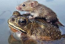 Hitching a ride / Hitching a ride