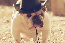 Bulldogs <3 / by Caitlin Gibson