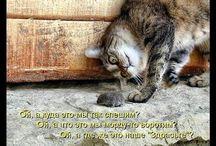 мир глазами котов
