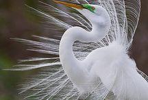 Beautiful exotic and amazing Birds