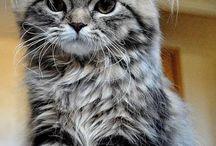 cats.'