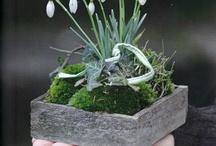 Der Frühling, ®™