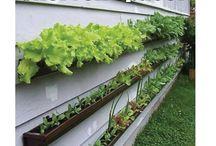 Vege gardens