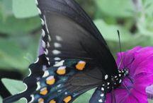 Butterflies and Moths of Washtenaw County, Michigan