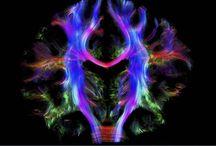 Belles images de Sciences / Pour montrer la beauté du travail scientifique