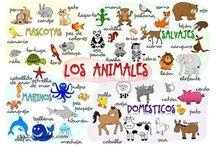 poroyecto los animales