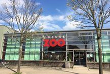 Innovation zoo project / Happen incredible innovators fully immerse in Odense Zoo!
