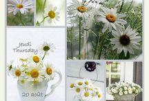 Bloemen / Mooie bloemen