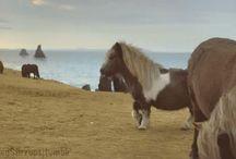 Paarden video's