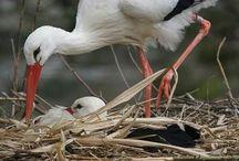ptaki natura
