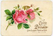 Розы ретро  Roses vintage