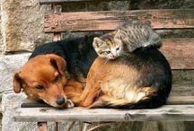 Zvířata domácí    (Animal, Pets)