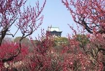 花、自然 / 大阪城公園梅林