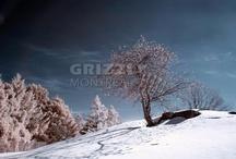 Québec by www.grizzlymontreal.com