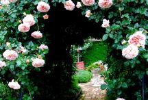 Flowers & Gardens / by Debra Rangel Guzman