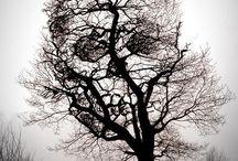 Écrié - images sombres