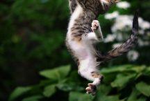 Photography: Pet Inspiration