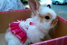 Para Rabbit