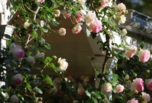 Garden Inspiration / A collection of wonderful outdoor spaces