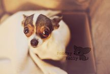 Chihuahuas / by Brandy Arnold