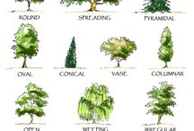 tree forms