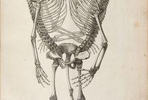 Bodies // Anatomy
