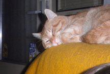 Náš kočičák Mourek / Fotky našeho čtyřnohého člena rodiny...kocoura Mourka :-)