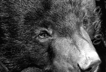 Bears.....where it all began. / by Susan Wodicka
