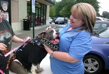 Kisses from Indy, Dollars for Rikki's! / Today (9/13/14) there was a fundraising event for Rikki's Refuge at Cici's Pizza in Richmond, VA. (North Chesterfield Location) between 11 AM - 5 PM.  Something else happened too, something very cool and kind and generous and amazing! Virginia's own INDIGO WHEELED TERRIER came to help with his mom, Katie Leahy! Indy sold kisses for a dollar to help Rikki's Refuge! THANK YOU INDY!