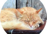 Gold Coast Cat Boarding