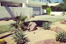 Mid Century Garden Ideas
