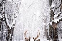 iarnaa