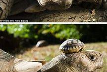 Chillpadde