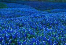 Flowers land
