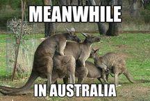 Meanwhile in Australia / Australian jokes and humour